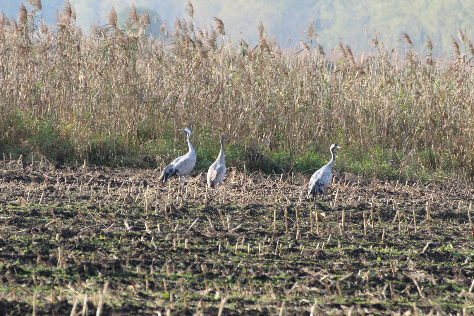 Birdwatching in Poland, fot. M. Szoszkiewicz