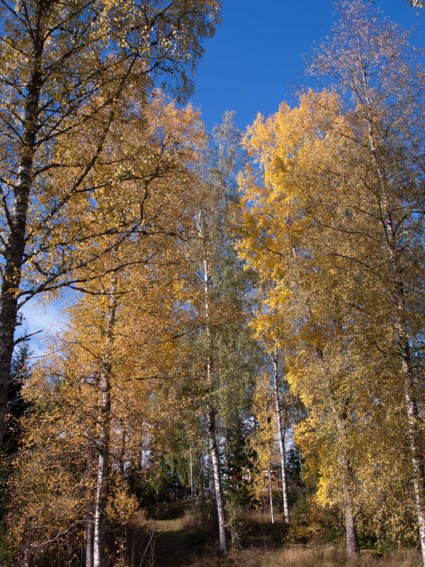 Herbst in Polen