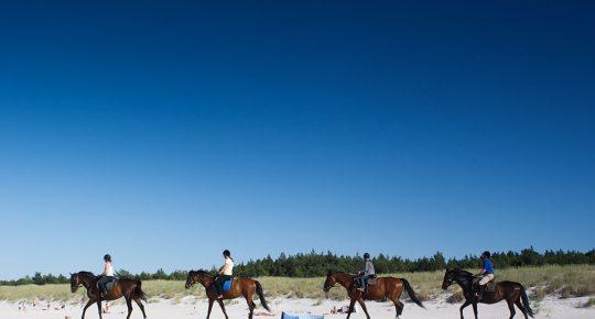 horse riding Baltic Sea Poland