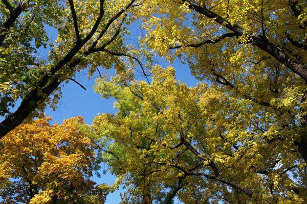 Goldener Herbst in Polen